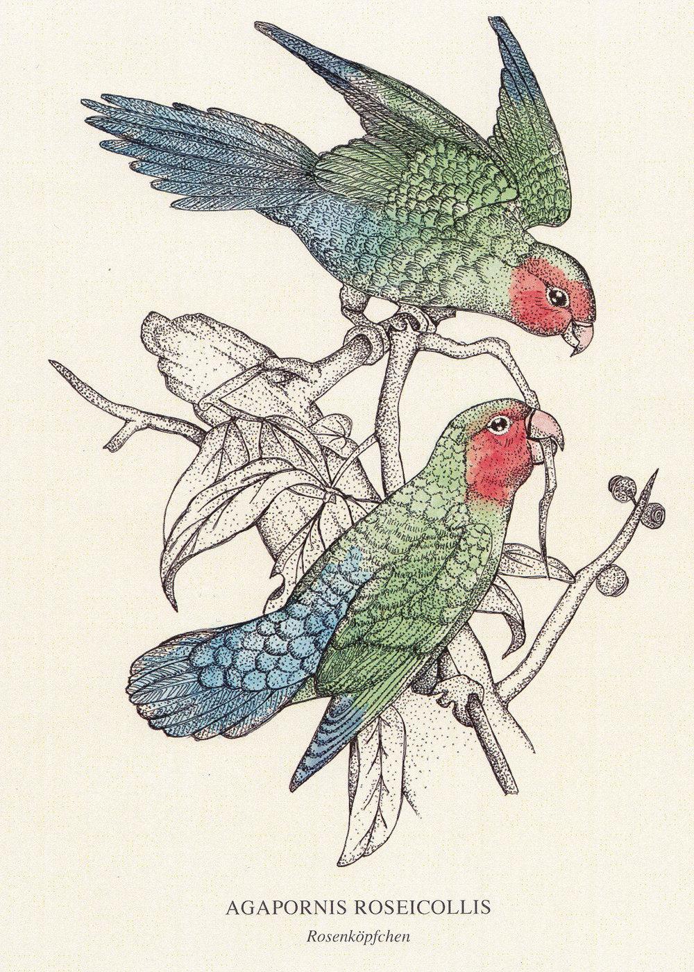 Web_BirdsKarte.jpg