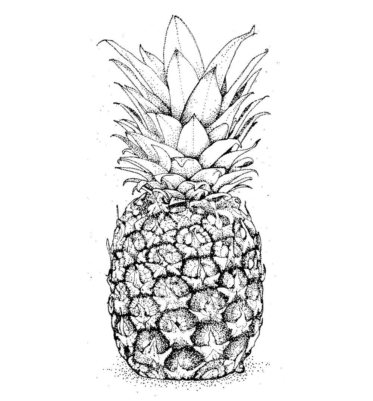 1500x1612_ananas.jpg
