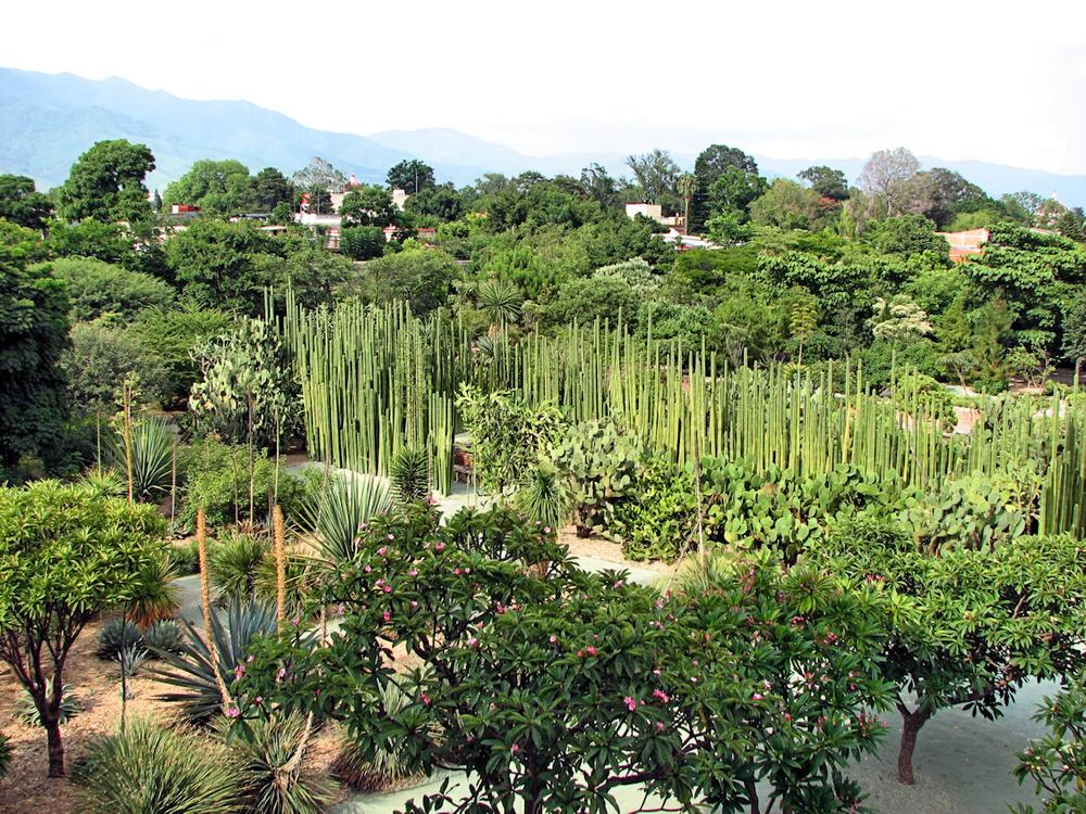 Jardín_Etnobotánico_en_Oaxaca.png