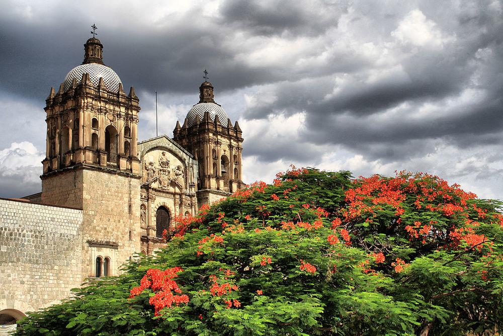 1024px-Florecer_en_Oaxaca.jpg