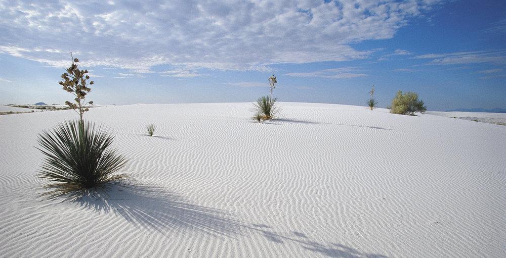whitesands9.jpg
