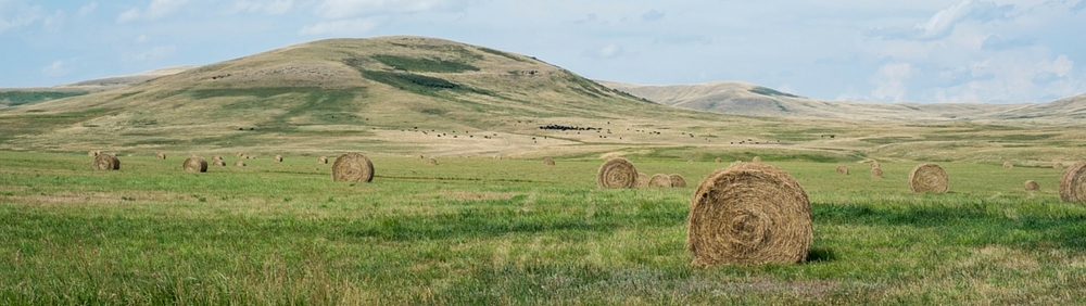 Round bales waiting for pickup by rancher on Montana ranch