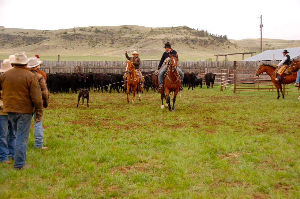 Montana ranchers branding together in the spring