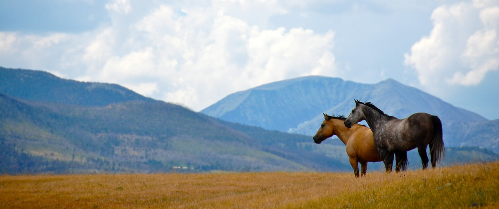 Two horses on generational Montana ranch