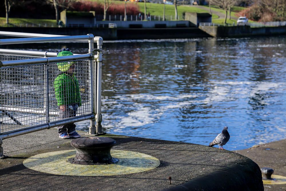 reptar-pigeon.jpg