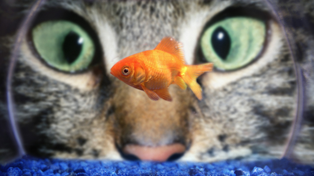 Cat_Fish_Bowl