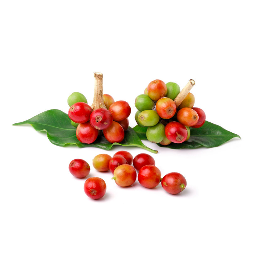 Coffee_Cherries_&_Leaf.jpg