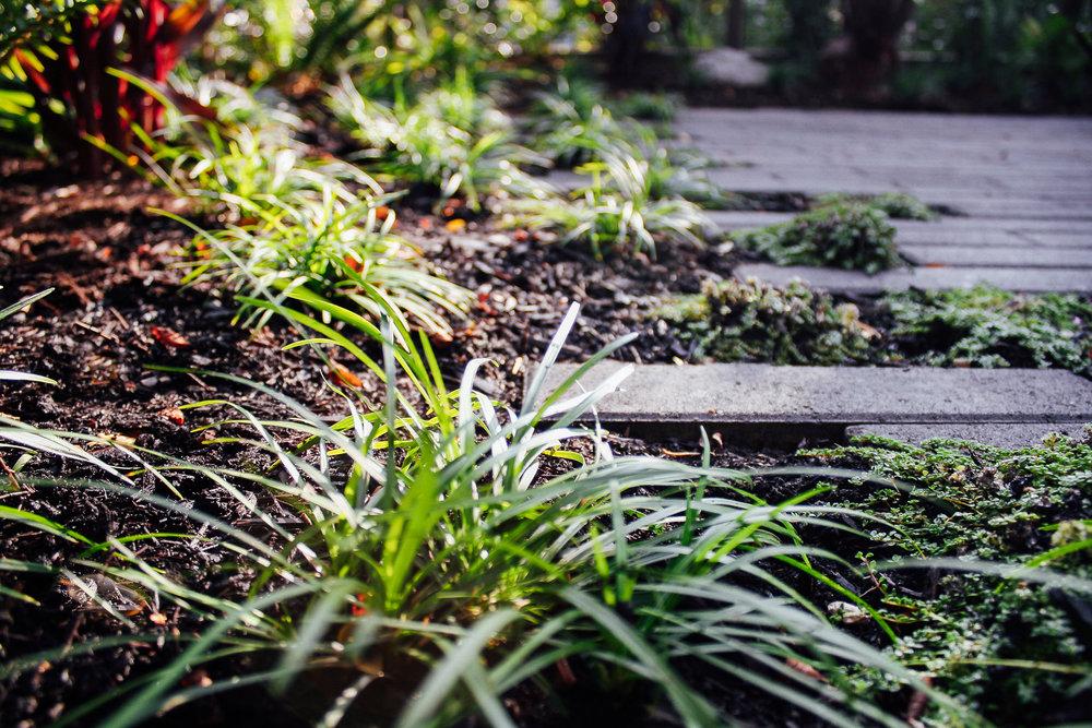 Boise Eliot Modern Pistils Landscape Design-5.jpg