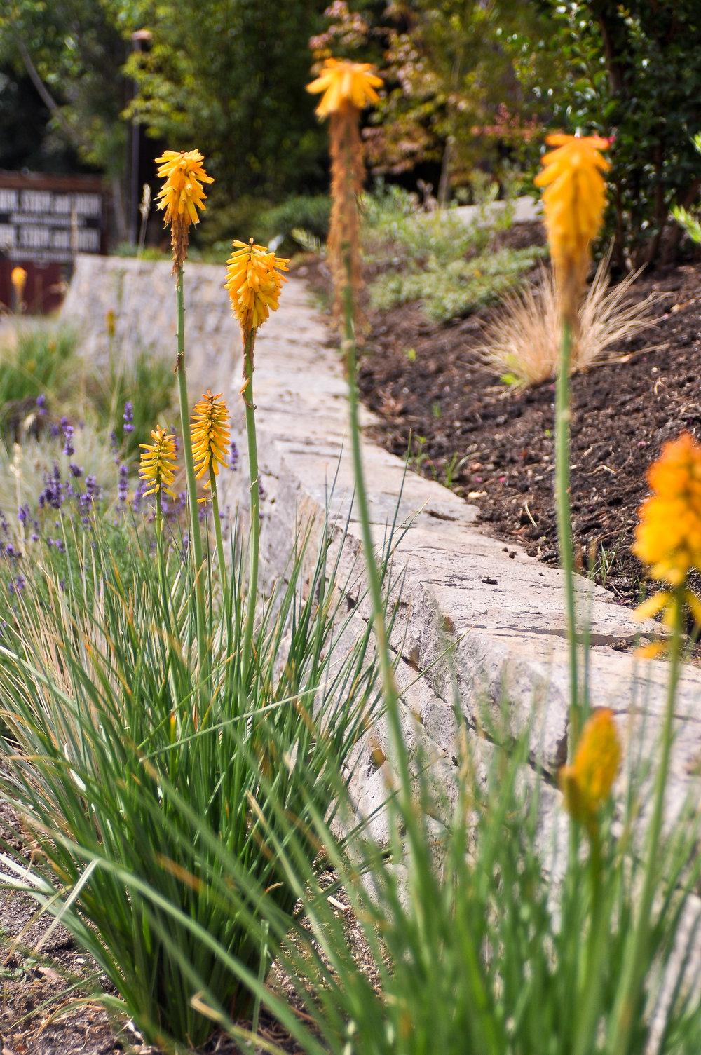 Multnomah Village - Pistils Landscape Design-5.jpg