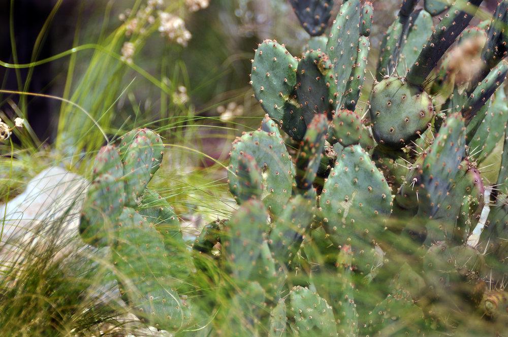 opuntia-rooftop-garden.jpg