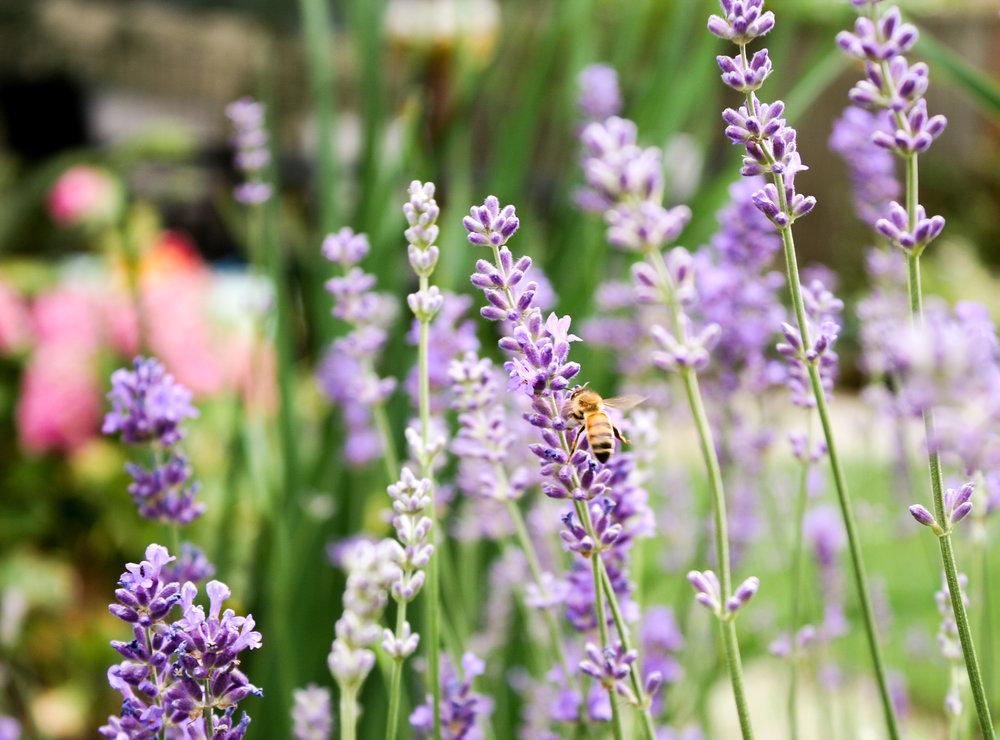 Beaumont - Pistils Landscape Design-22.jpg