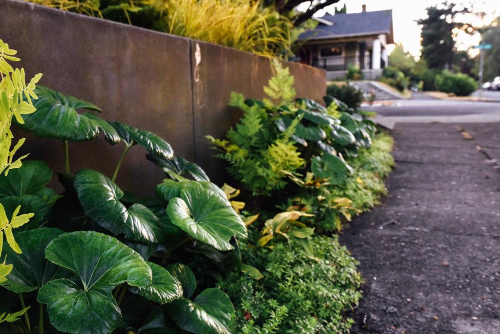 North Portland Bluffs - Pistils Landscape Design-6.jpg