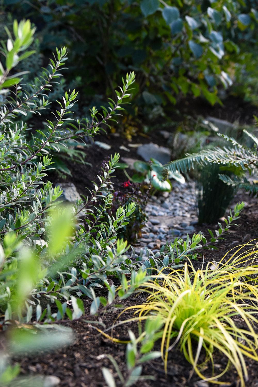 Eliot - Pistils Landscape Design.jpg