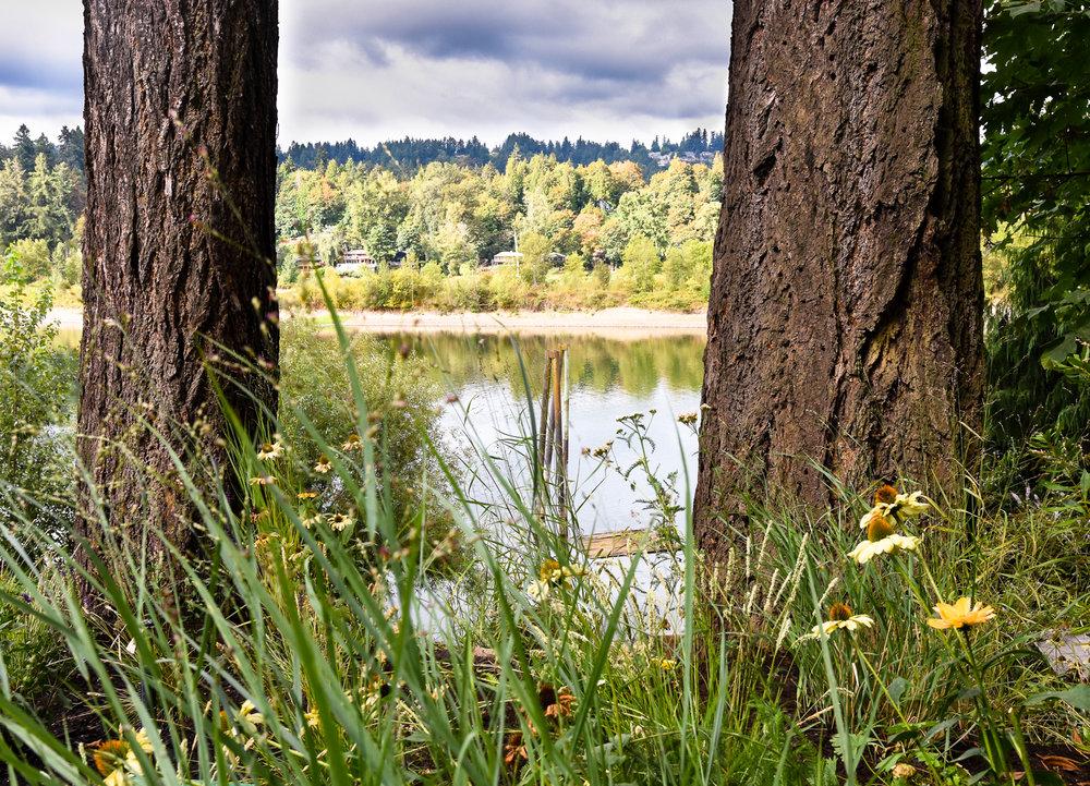 Willamette River - Pistils Landscape Design-9.jpg