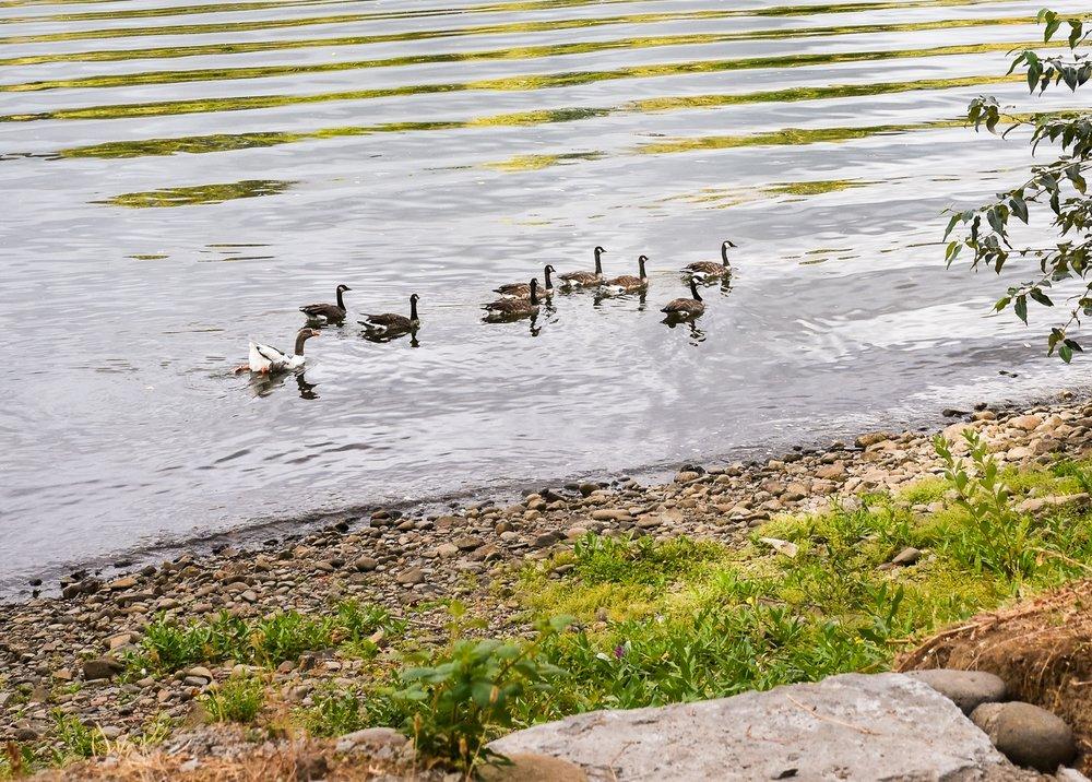 Willamette River - Pistils Landscape Design-2.jpg