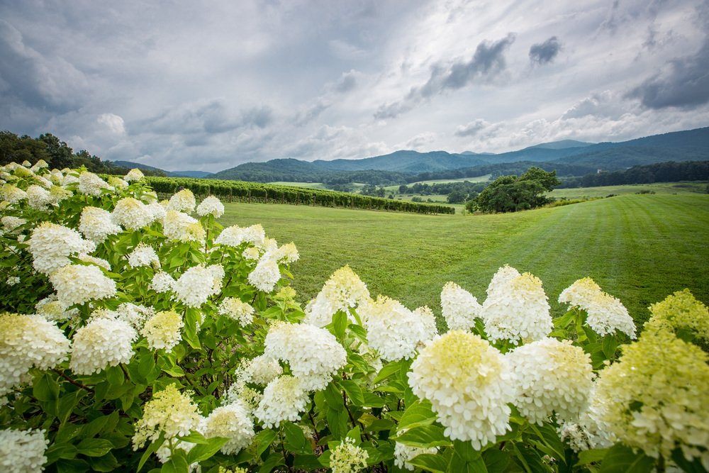 Pippin Hill Farm & Vineyards near Charlottesville, VA