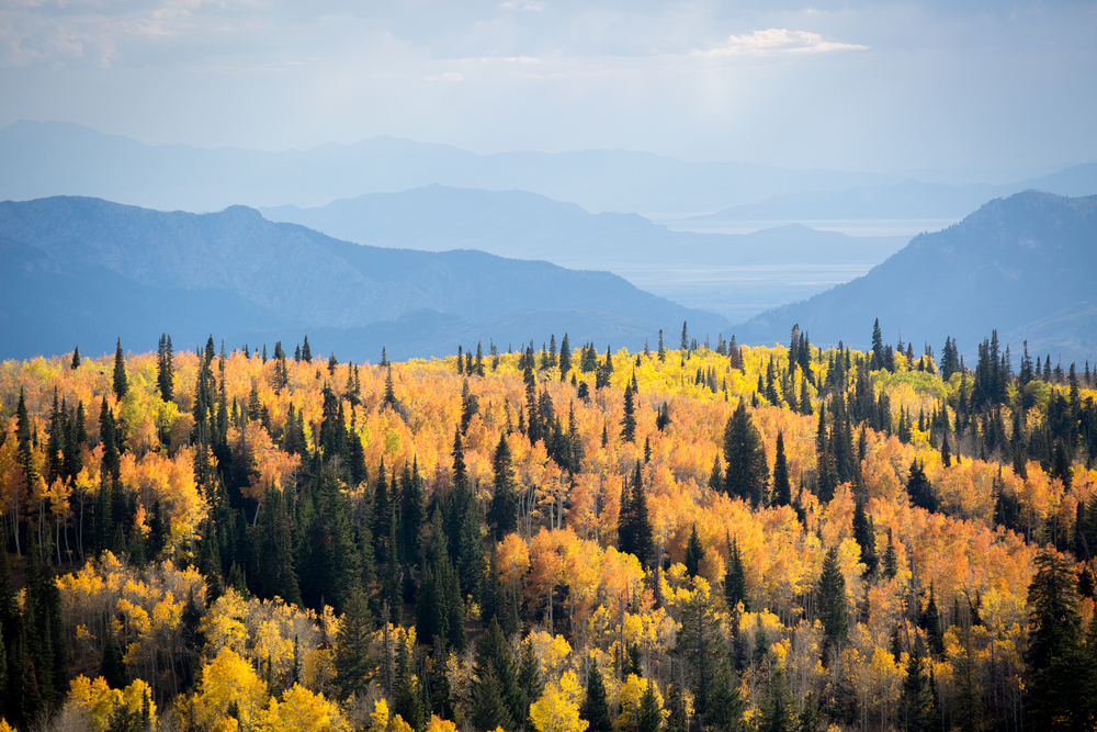 Fall Foliage on Powder Mountain, Utah
