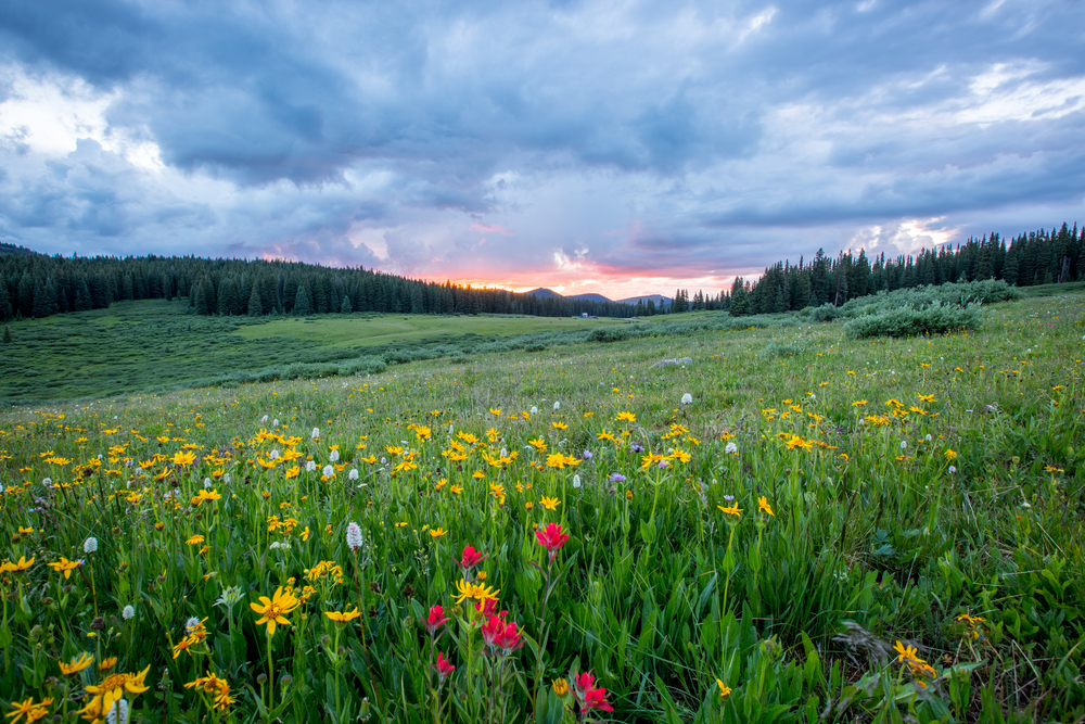 A vibrant sunset through a field of wildflowers in Vail, Colorado