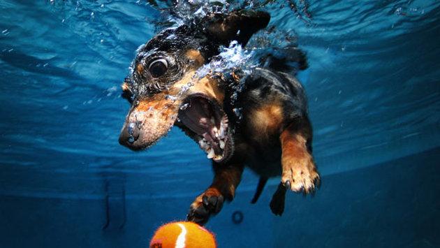ht_underwater_dog_jp_120216_wmain