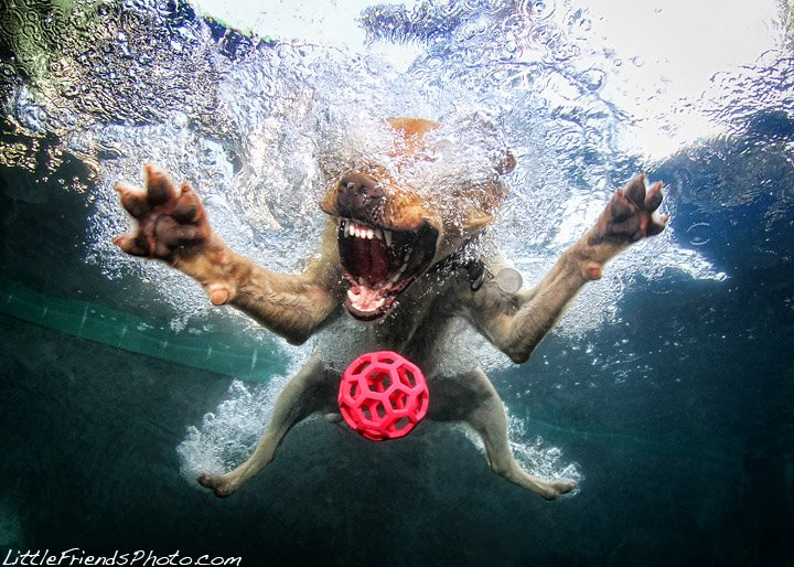 seth-casteel-underwater-dog