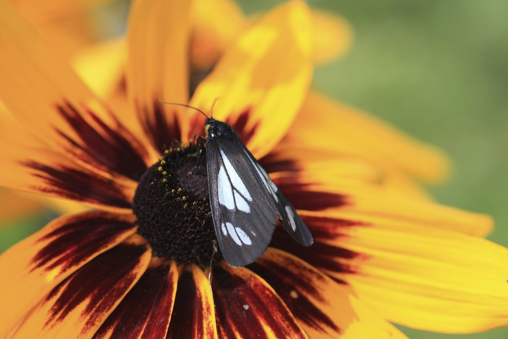 Butterfly on Flower, counselling offered by Courtney Wren Mabbutt, a therapist in Nelson, Castlegar, and the Slocan Valley.