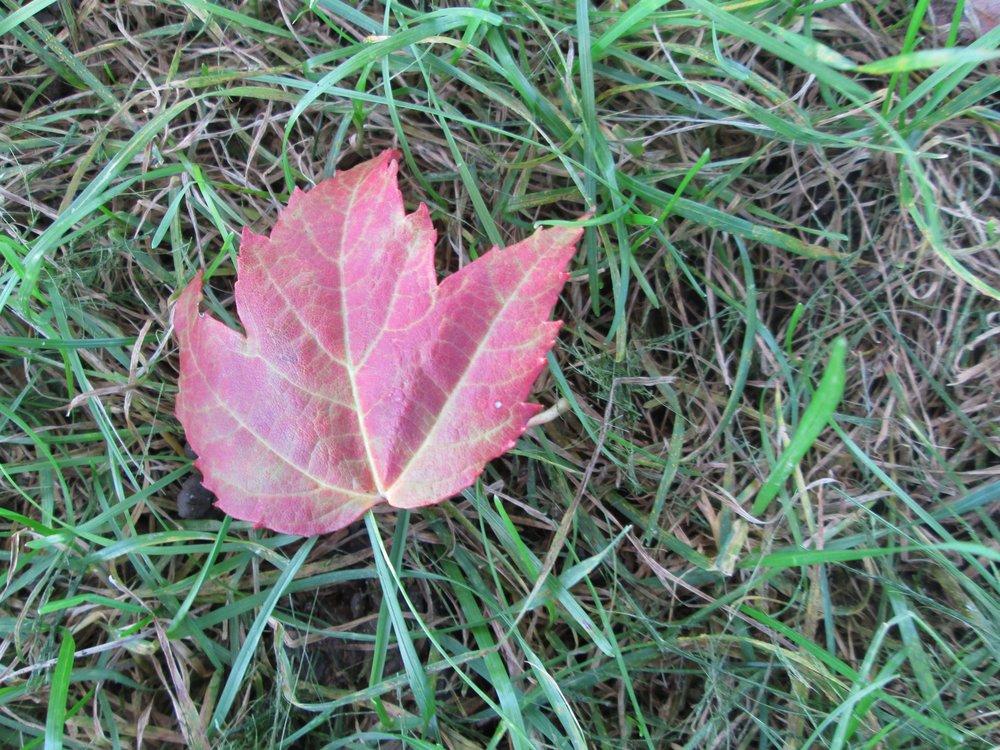 A single fallen leaf