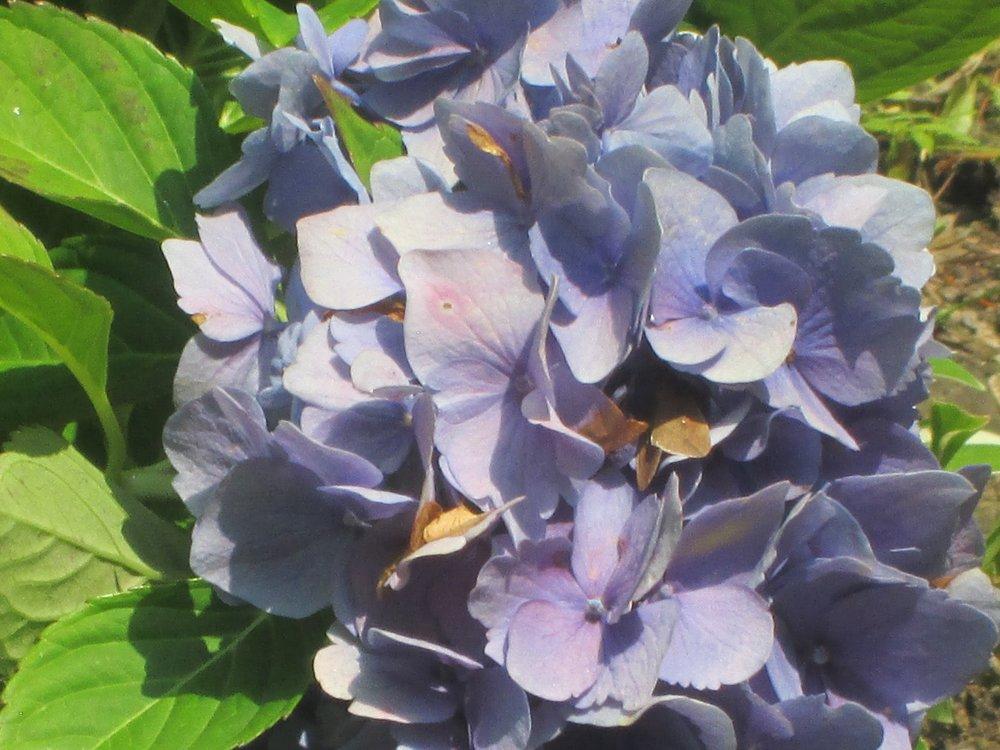 Flower, Detail