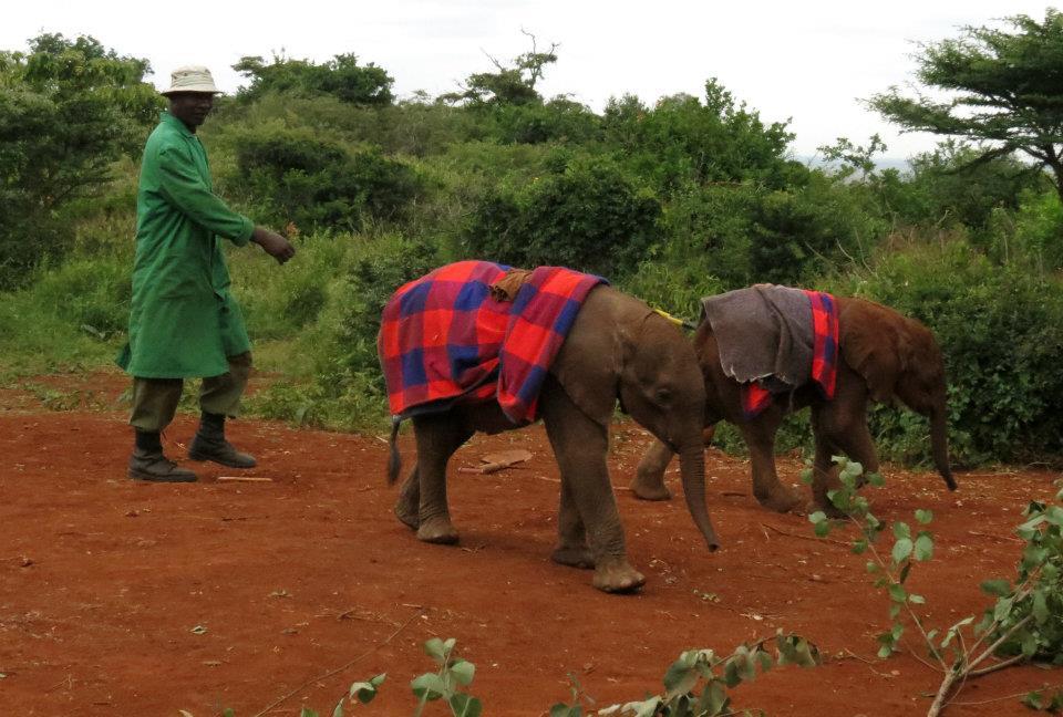 orphan-elephant-keeper