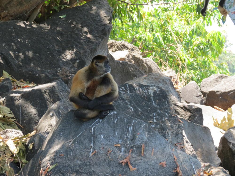 spider-monkey-nicaragua