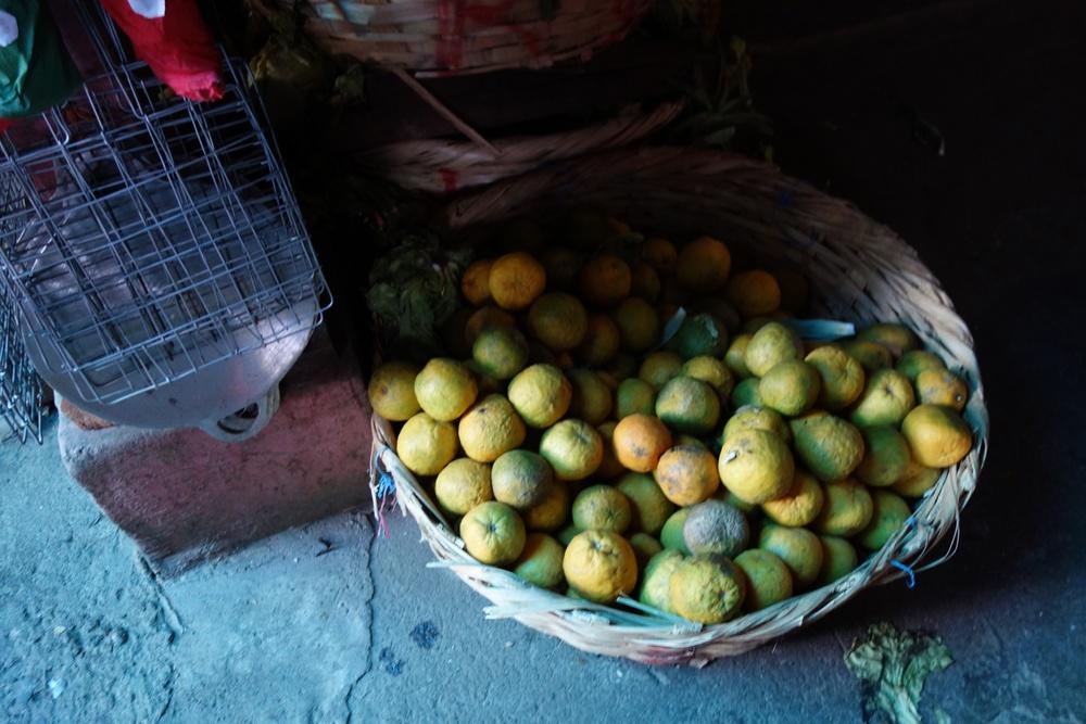 nicaragua-lemons