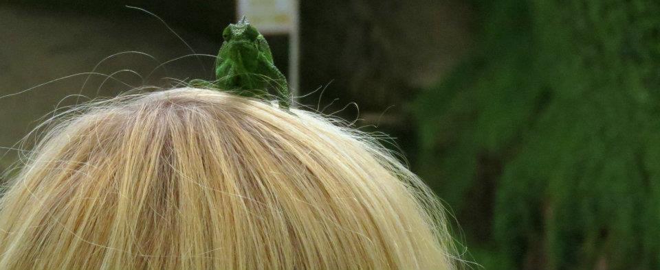 chameleon-pet