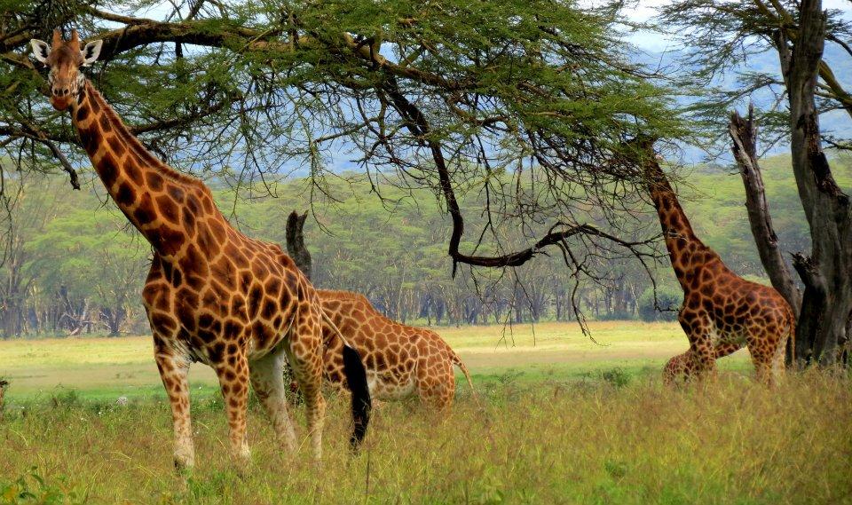 √ Visit best friend in Kenya