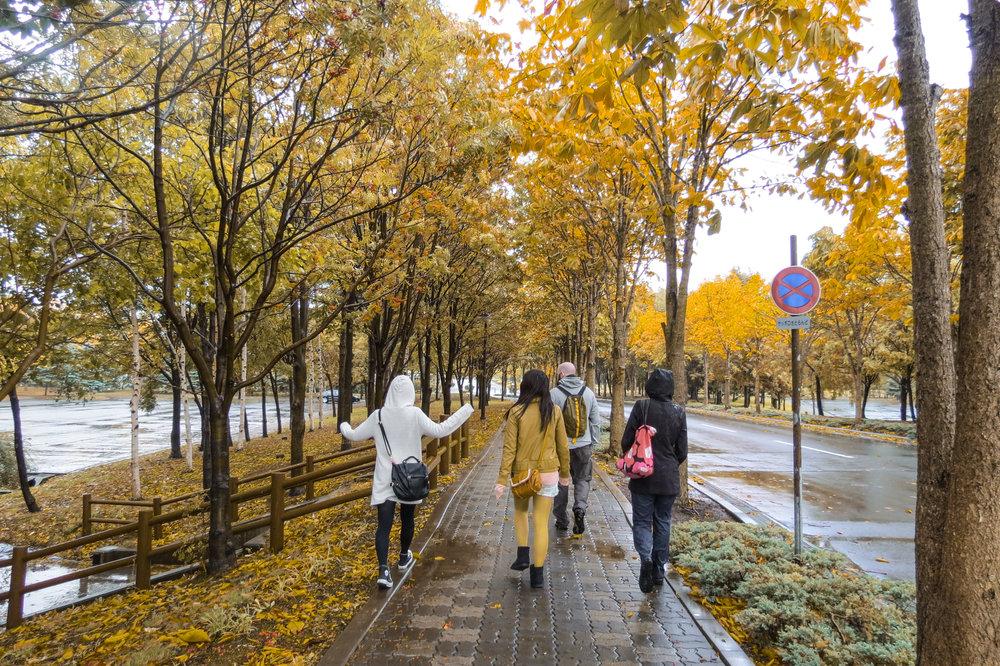 hokkaido-autumn-leaves