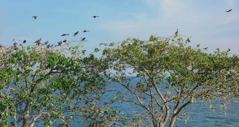 ugandan-birdlife-samuka-bird-santuary