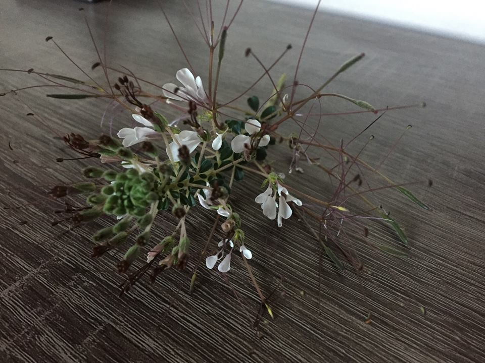 A gift from one of our girls. We could never quite decide if it was flower or weed, but loved it all the same.