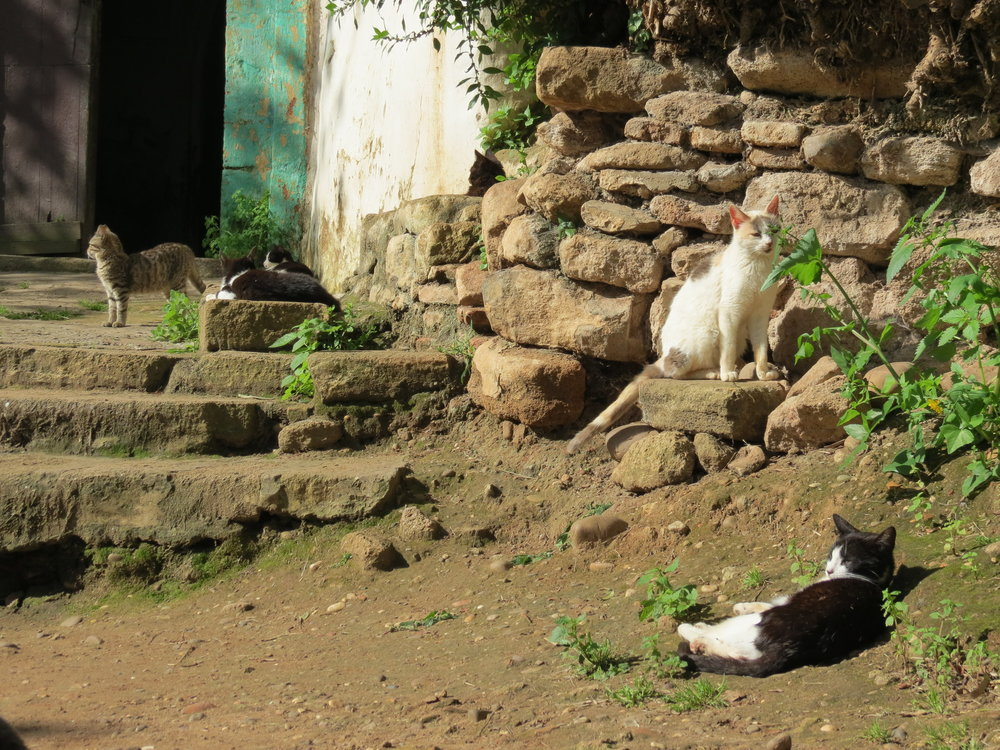 The only inhabitants of Chellah, Rabat, are the resident cats.