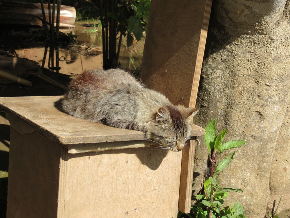 Chellah's cats sleep in the sun in the gardens of the ancient ruins.