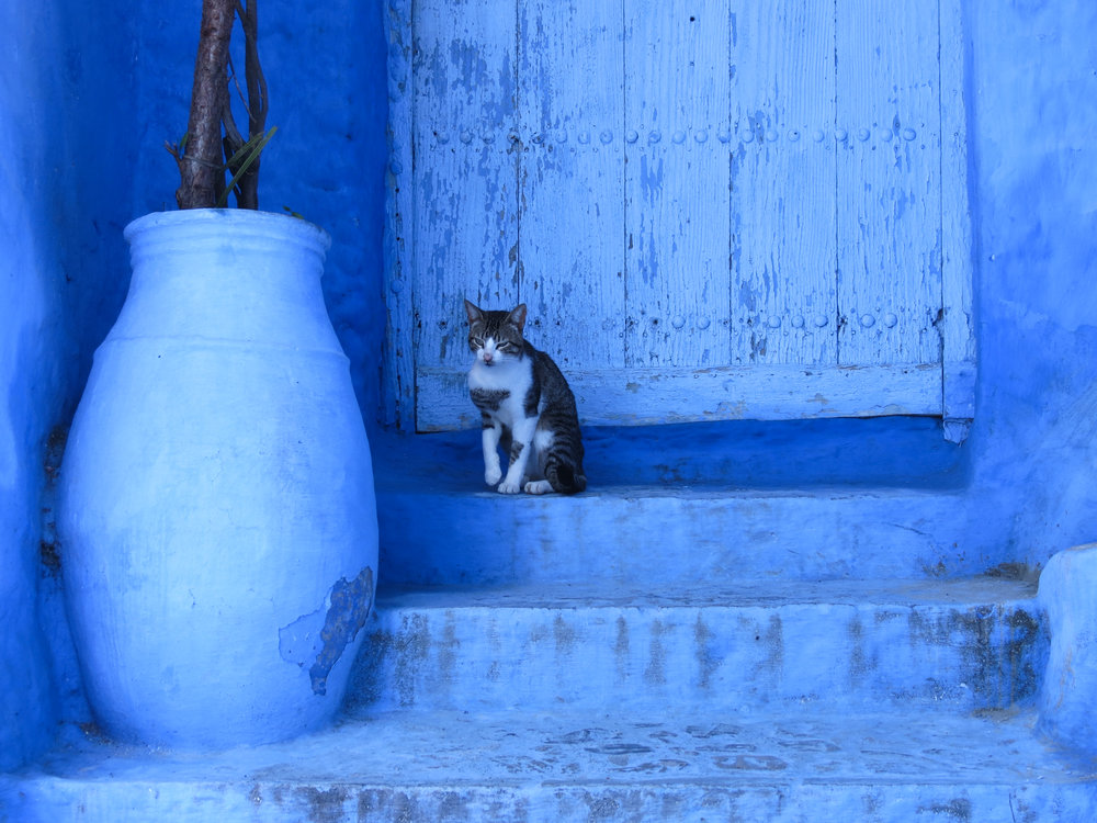 A cat sits on his front stoop, reflecting the blue-washed walls of Chefchaouen.