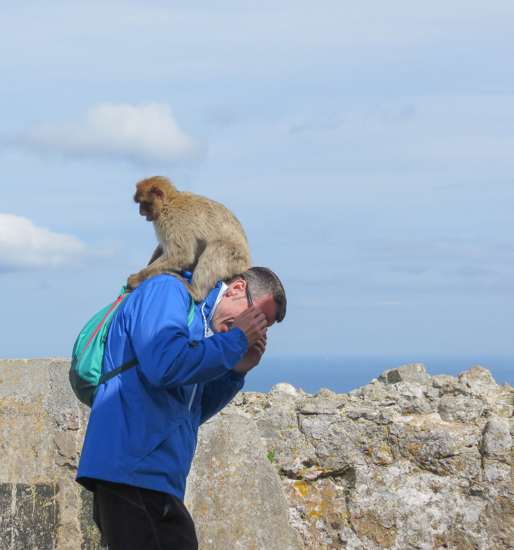 A monkey tries to steal food from a man's bag on the Rock of Gibraltar.