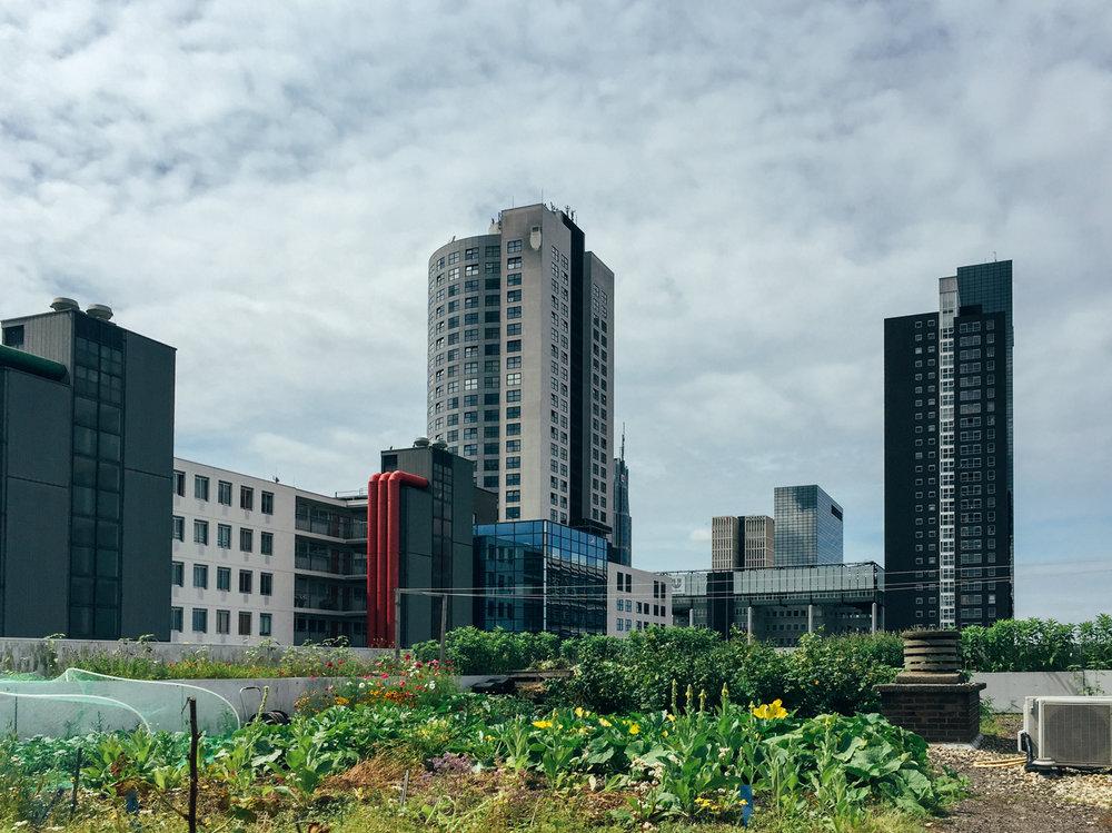 Rooftop restaurant OP HET DAK with it's own organic food garden