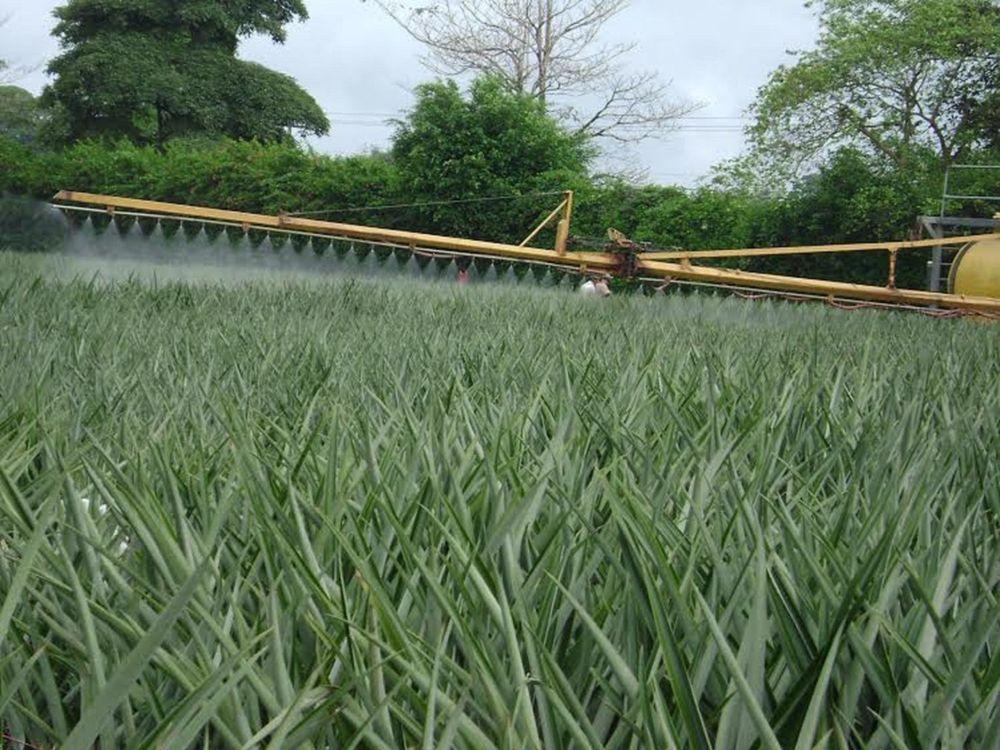 Application of pesticides in a pineapple field, Costa Rica. Photo: Jose Alonso Cordero Camacho