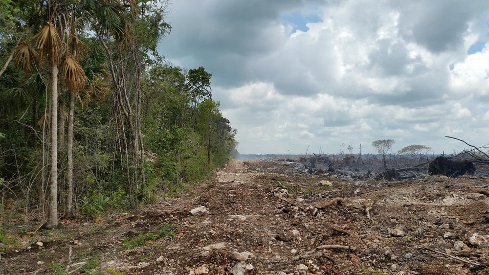 The contrast between conservation and deforestation. Photo copyright: CSFI.bz / ITCFund.org