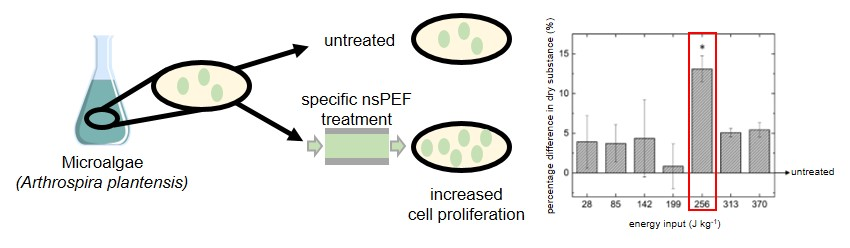 Effect of nanosecond pulsed electric field treatment on cell proliferation of microalgae, a summary of the whole study. (Buchmann et al. 2019.  Bioresource Technology 271:  402-408)