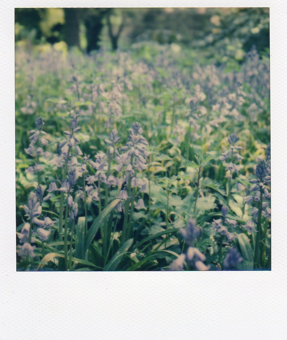 Polaroid2016041.jpg