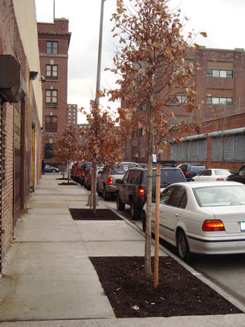 Request work - New Tree Planting.jpg