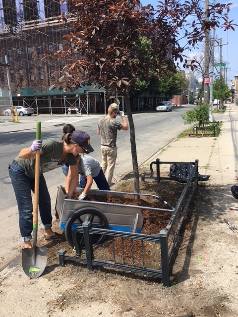 Adding mulch to the weeded and cultivated tree bed helps retain moisture in the soil during the hot summer months
