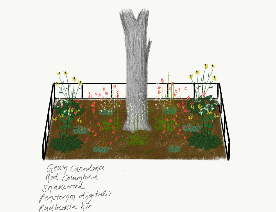Intern Alzira's Design  The plants of this palette include White Avens, Red Columbine, Snakeroot, Foxglove, and Black Eyed Susan. This palette is designed to be aesthetically pleasing and to attract pollinators. Plants will grow up to 2-3 ft and blooms are expected from late Spring to early Autumn.