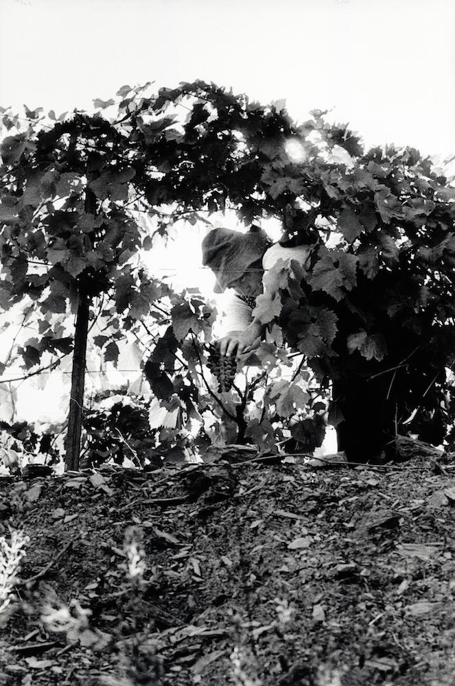 walter_rothwell_douro_port_wine_07.jpg