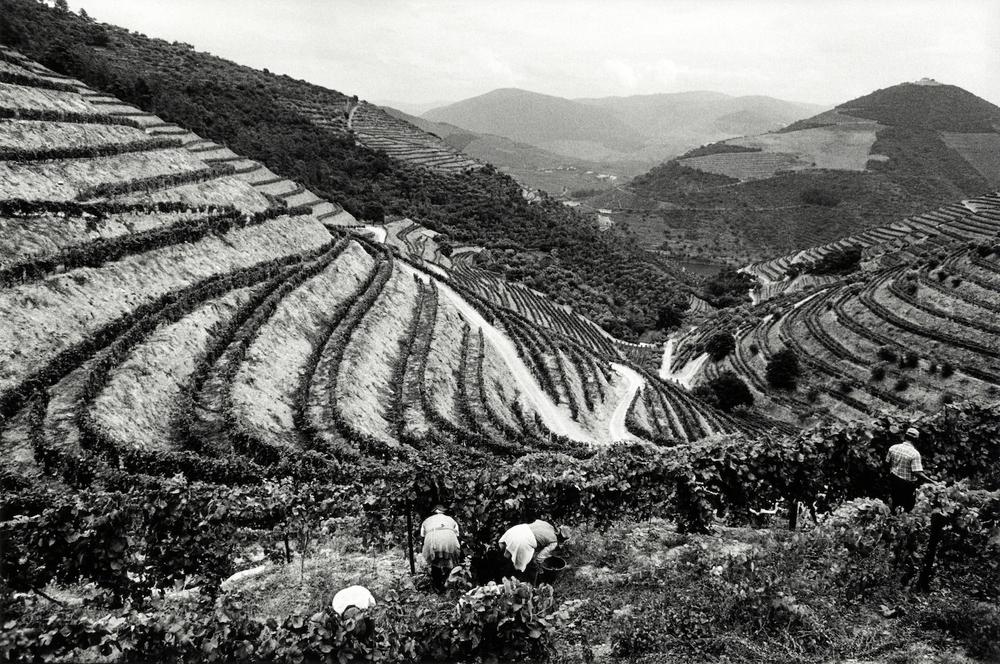 walter_rothwell_douro_port_wine_06.jpg