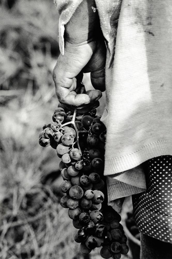 walter_rothwell_douro_port_wine_08.jpg